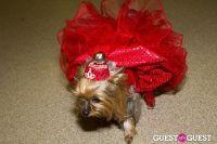 Pebble Iscious and Z Zee's Disco Birthday Bash  #55