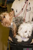 Pebble Iscious and Z Zee's Disco Birthday Bash  #109