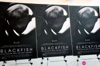 Blackfish Special Screening #72