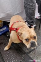MidCity Dog Days Festival #14