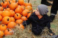 Old Navy's Urban Pumpkin Patch #24