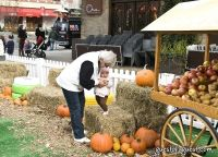 Old Navy's Urban Pumpkin Patch #40