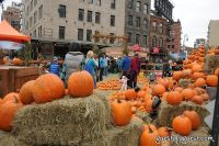 Old Navy's Urban Pumpkin Patch #60