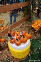 Old Navy's Urban Pumpkin Patch #73