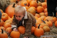 Old Navy's Urban Pumpkin Patch #76
