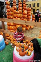 Old Navy's Urban Pumpkin Patch #77