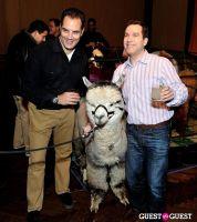 The Alpaca Project Celebration #12