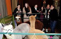 The Alpaca Project Celebration #47