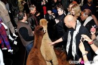 The Alpaca Project Celebration #63