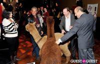 The Alpaca Project Celebration #65