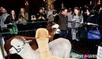 The Alpaca Project Celebration #74