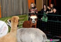 The Alpaca Project Celebration #75