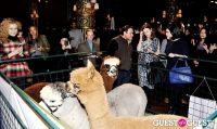 The Alpaca Project Celebration #76
