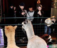 The Alpaca Project Celebration #90