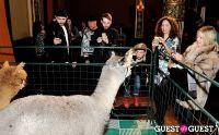 The Alpaca Project Celebration #91
