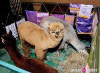 The Alpaca Project Celebration #102