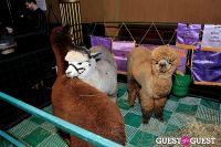 The Alpaca Project Celebration #122