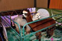 The Alpaca Project Celebration #123