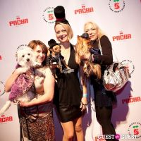 Beth Ostrosky Stern and Pacha NYC's 5th Anniversary Celebration To Support North Shore Animal League America #46