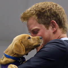10 Photos Of Prince Harry & Puppies You Won't Be Able To Stop Thinking About