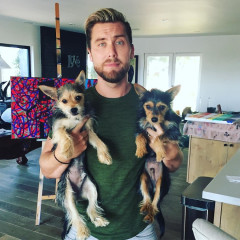 Would You Do Dog Yoga With Lance Bass?
