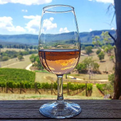 The Autumn Rosé: Everything You Need To Know About Orange Wine
