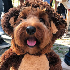 The Cutest Canines At The 2017 Halloween Dog Parade