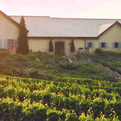 Hamptons Wine Tasting: 8 Vineyards To Visit This Fall