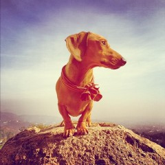 Photo Of The Day: The King Of Runyon Canyon