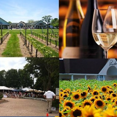 Guest of a Guest and Gilt City Daily Deal: Hampton Luxury Liner Wine Tour For Two