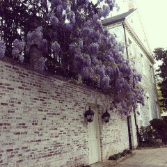 Photo Of The Day: Wisteria In Georgetown