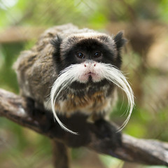 10 Majestic Mustaches Of The Animal Kingdom For Movember