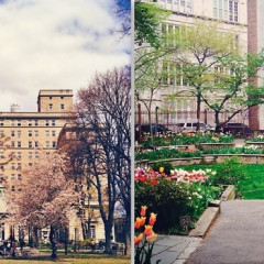 Summer Strolls: 10 NYC Gardens You Probably Didn't Know About