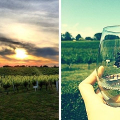 Wine Tours 101: The Top Vineyards To Visit On Long Island