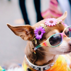 The Most Adorable Halloween Pups At The Tompkins Square Dog Parade