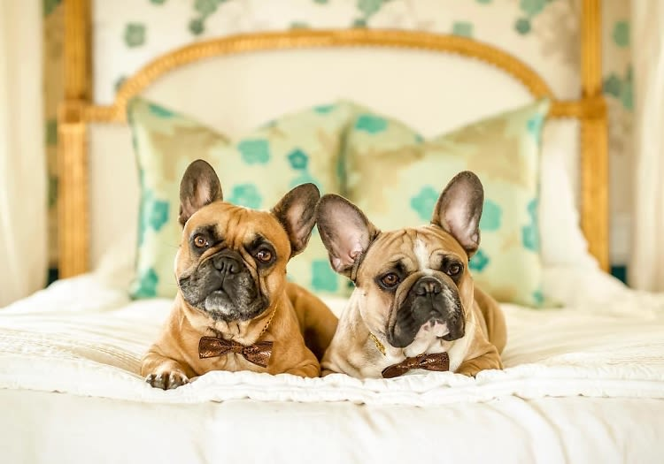 The 10 Best Dogs For NYC Apartments
