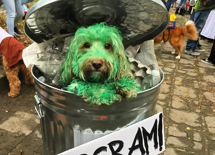 2020 Fort Greene Halloween Just 10 Adorable NYC Dogs Dressed Up For Halloween