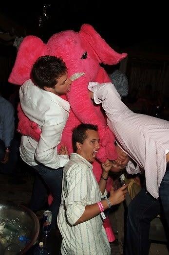 pink elephant capri
