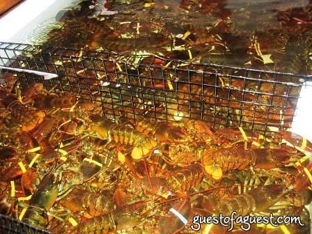 lobsters in montauk