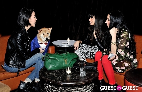 Menswear Dog's Capsule Collection launch