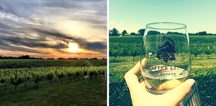 Long Island Vineyards