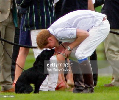 prince harry in 10 Photos Of Prince Harry & Puppies You Won't Be Able To Stop Thinking About