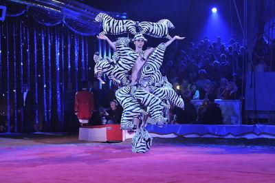 Monte Carlo Zebras