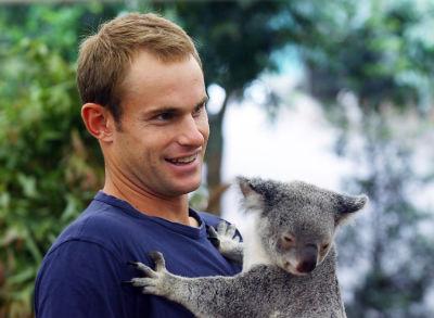 Andy Roddick with koala