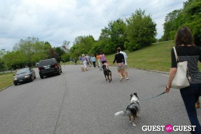 justin timberlake in Paws Across The Hamptons Dog Walk To Benefit Southampton Hospital & Animal Shelter Foundation