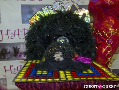 teresa costanzo in Pebble Iscious and Z Zee's Disco Birthday Bash