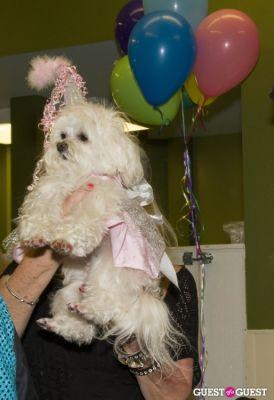 z zee-zeins-in-her-birthday-hat-and-happy-birthday-dress!!! in Pebble Iscious and Z Zee's Disco Birthday Bash