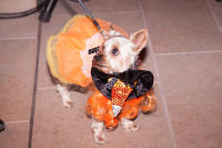 Bow Wow Beverly Hills Presents… 'A Night in Muttley Carlo' with James Bone, the Amanda Foundation Annual Halloween Fundraiser  #22