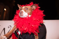 Bow Wow Beverly Hills Presents… 'A Night in Muttley Carlo' with James Bone, the Amanda Foundation Annual Halloween Fundraiser  #81