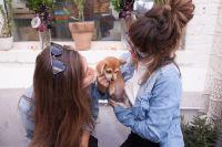Mowgli Rescue & Rahicali's Furry Friendsgiving at The Butcher's Daughter #14